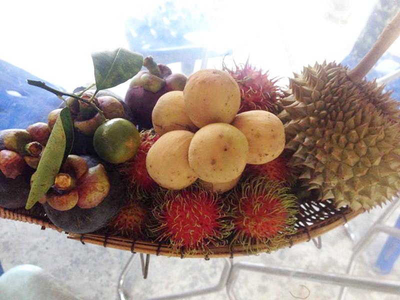 ผลไม้ต่างๆ ภายในสวนโถทอง